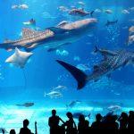 子どもと水族館 – 子連れで水族館を徹底的に楽しむ方法