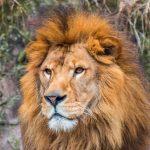 子どもと動物園– 子連れで動物園を徹底的に楽しむ方法
