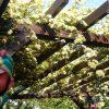 パーゴラを極めし者 – パーゴラ(藤棚)のDIYでの作り方、キットとたくさんの画像