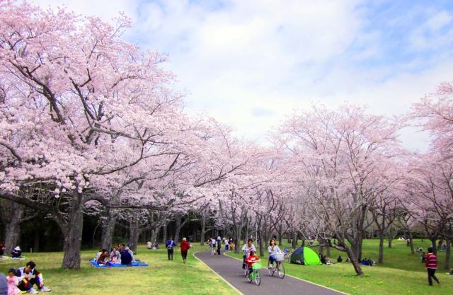昭和の森 サイクリング